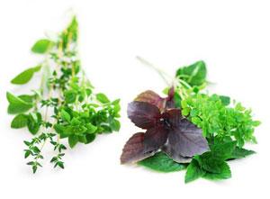 Съедобная и лечебная зелень