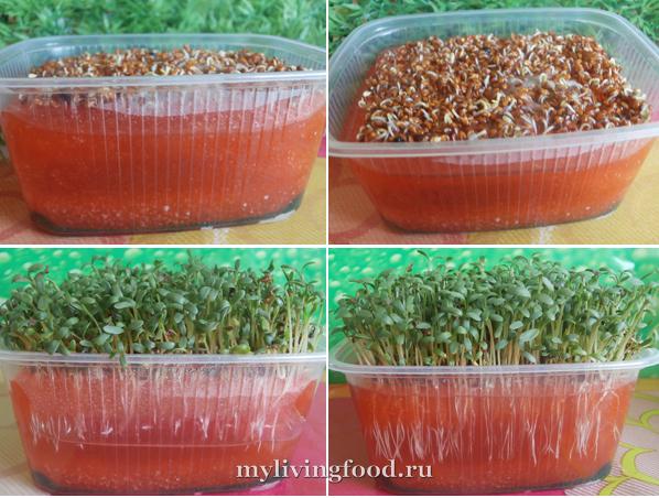 Кресс салат на подоконнике