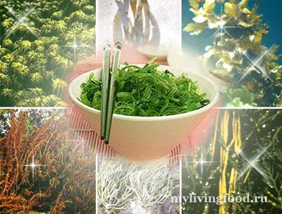 Морские овощи на вашем столе