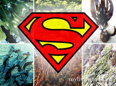 Морские водоросли - суперфуд