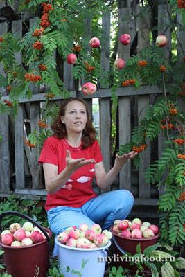 Яблоки падают в небо!