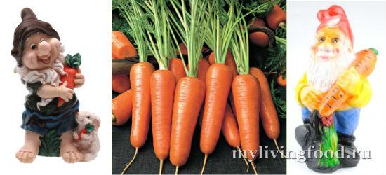 Польза сырой моркови и морковного сока