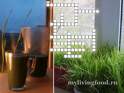 Зеленый коктейль с «домашними дикоросами» и спирулиной + онлайн кроссворд про дикорастущие растения