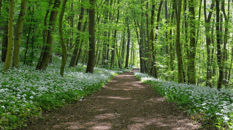 Дикоросы – самая полезная зелень