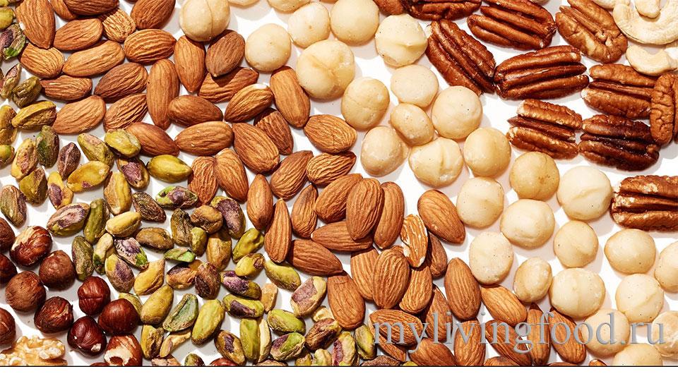 Виды орехов фото